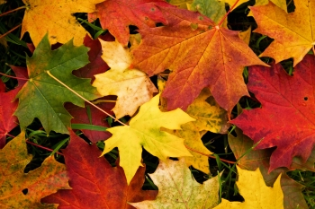 autumn-leaves-wallpaper1